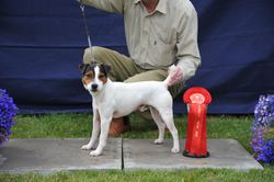 """Class 3 10-12 1/2"""" Smooth Coated Dog over 1 year"""