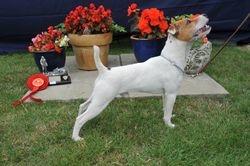 """Class 1 10-12 1/2"""" Dog Pup (6-12 months)"""