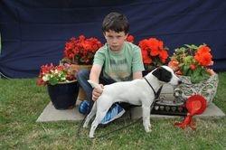 Class 17 Veteran Terrier