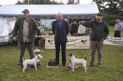 Class 26 Best Jack Russell Terier in Show