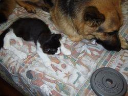 Finn and Lupa