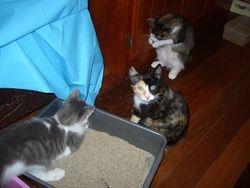 Bambi, Phoebe & Bimbo