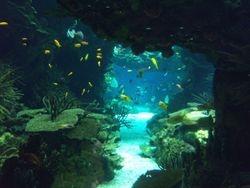 Lisabon/akvarijum