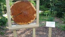 Timeline log and sign