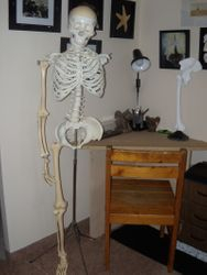 My Jigsaw Bucky Skeleton