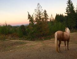 Vista View golden hour
