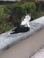 Cute school barn cats