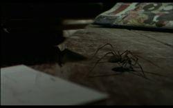 Il Sorriso di Diana - 3D Animated Spider