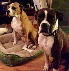 Cinna and Tyson