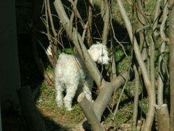 Tarzan Dog