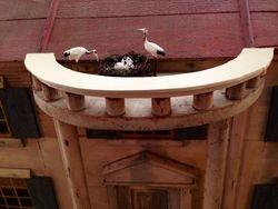 Nesting Cranes