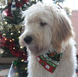 Duffy's First Christmas