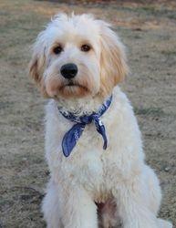 Duffy's First Haircut