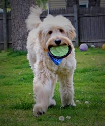 Duffy Loves to Play!