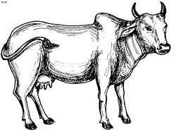 gomatha