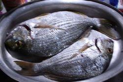 WERE HAVING FISH TONIGHT