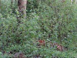 wayanad muthanga forest