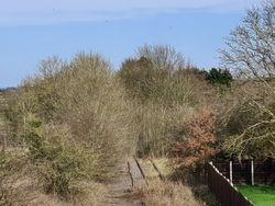 Looking towards Lichfield