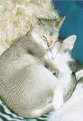 Mabel and LaPerm kitten Lulu
