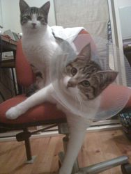 mittens with cone