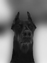 Adrian Arendt - My lovely dog