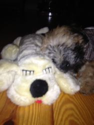 With her snuggle pet