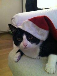 Le chat 1