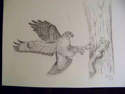 Hawk chasing squirrel
