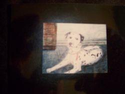 Dog Portrait