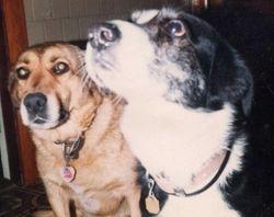 Sheba & Rascal
