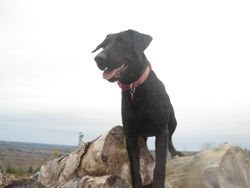 Bella on our hike