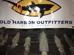 old harbor outfitters squid fish newport