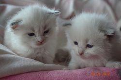 Little Miss & Muffit
