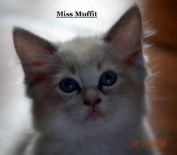 Miss Muffit