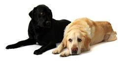 Buster & Geordie