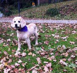 Bella Rose - Adopted!
