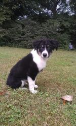 Shasta Whistle Britches - Adopted!