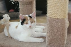 Kinsley - Adopted!
