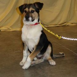 Rowdy - Adopted!