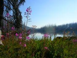 Monon Lake Flowers