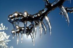 Ice Fangs