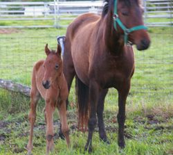 Foaly 2