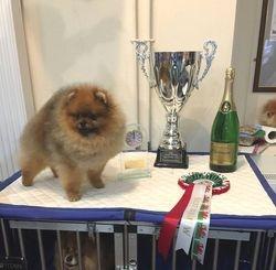 Best Dog & BIS: Paavali's Mr Fantastic JW
