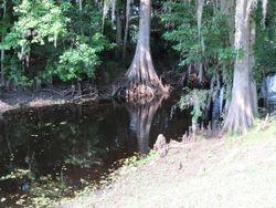 CANAL WHERE WE SAW A 3' GATOR