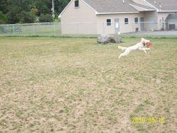 Spirit Loves the Lewiston Dog Park