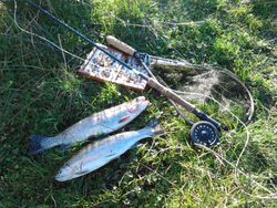 Trout Caught at Ballaghmore lakes