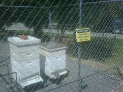 golf course apiary