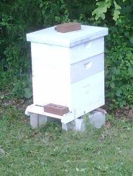 walkup apiary