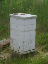 country apiary