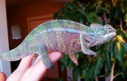 Pete, my rainbow boy